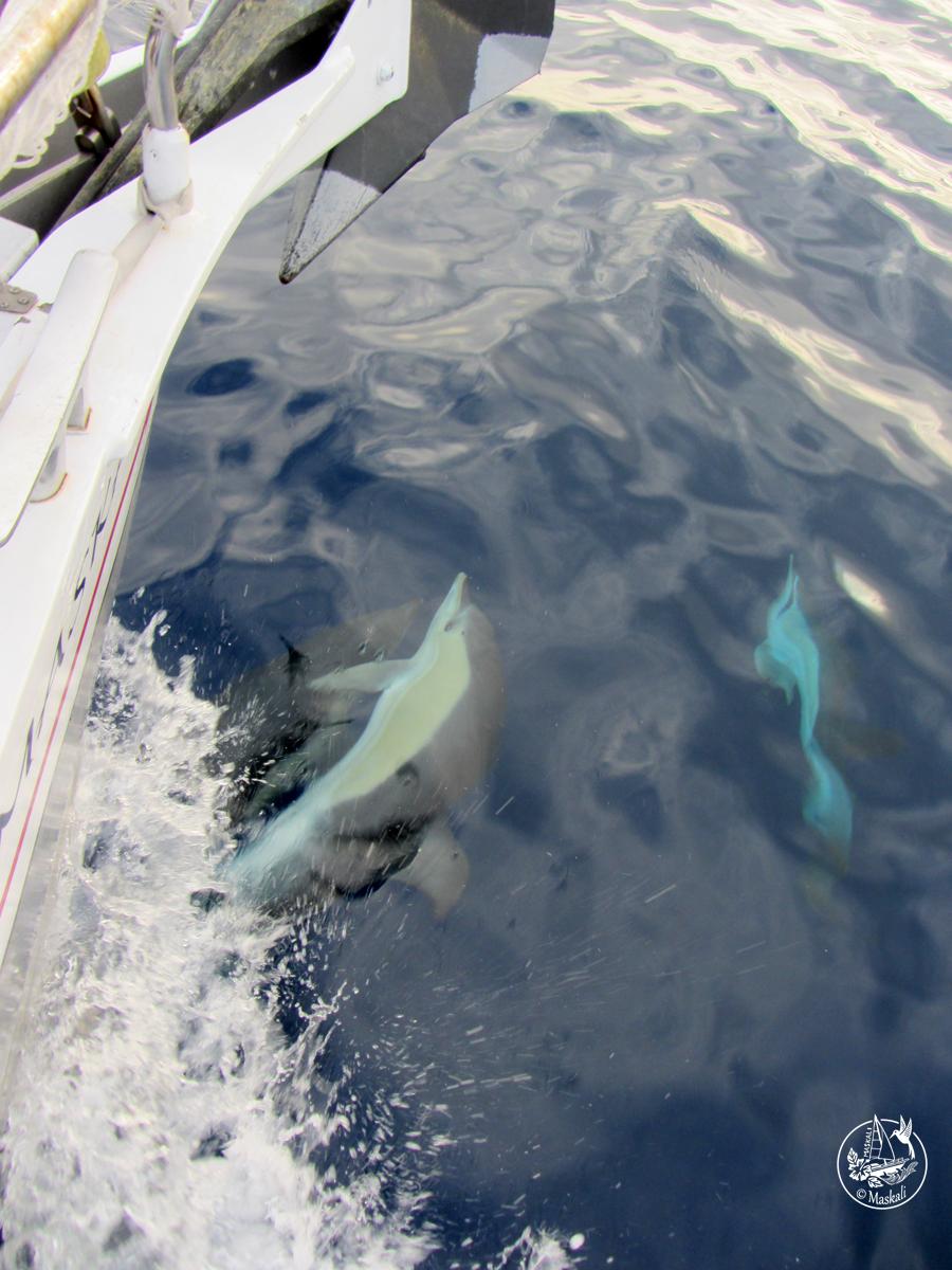 dauphins Gibraltar