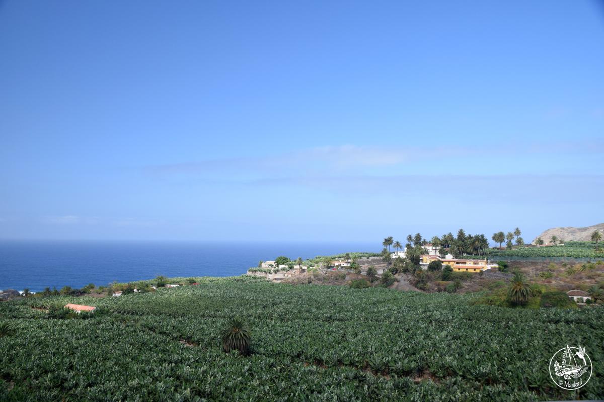 Tenerife - bananeraies