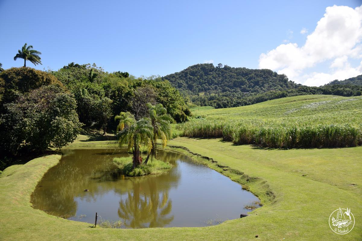 Du 25 au 27 janvier : tour de la Martinique en voiture