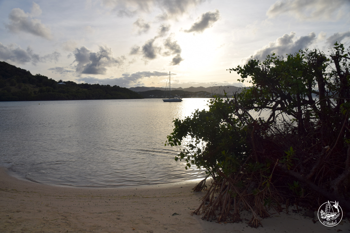 Du 20 au 23 janvier : la côte est de la Martinique