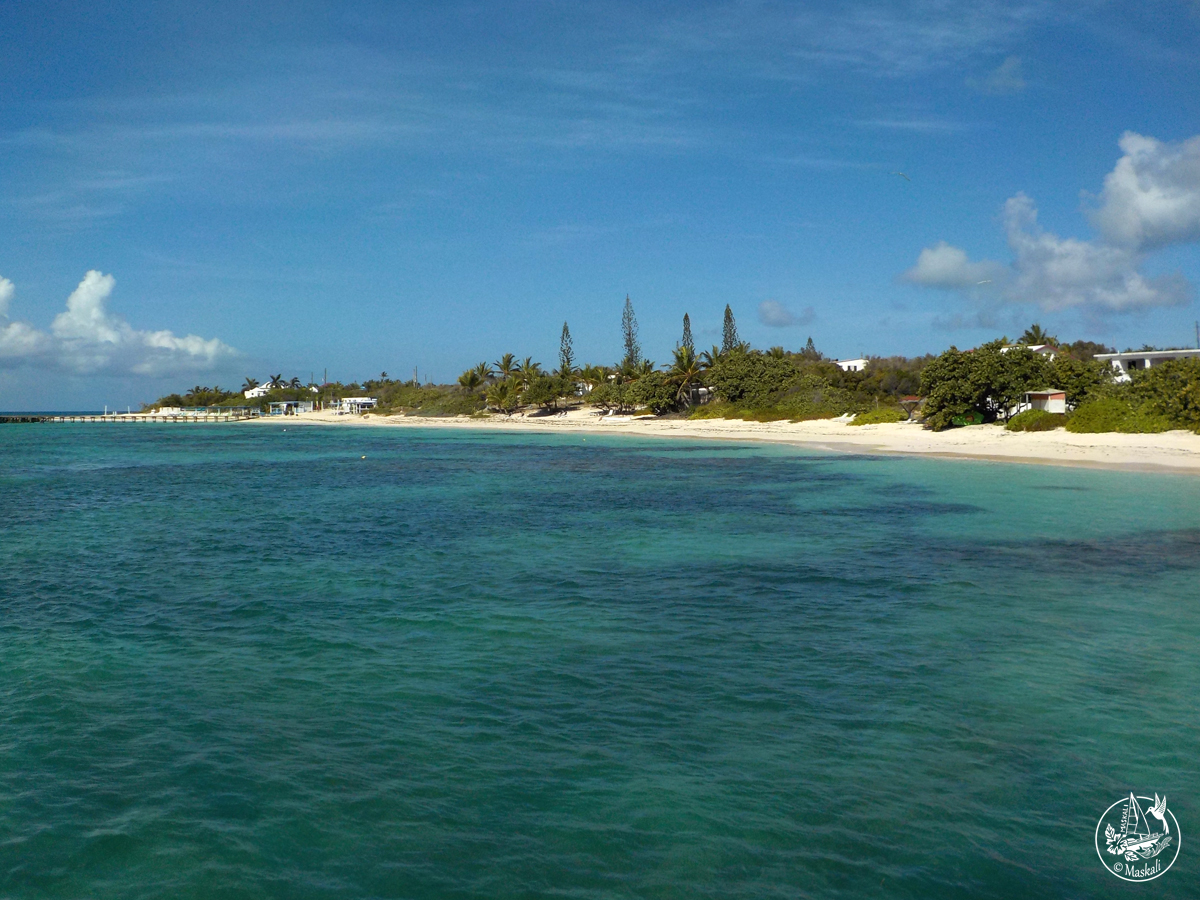 dauphin Anguilla