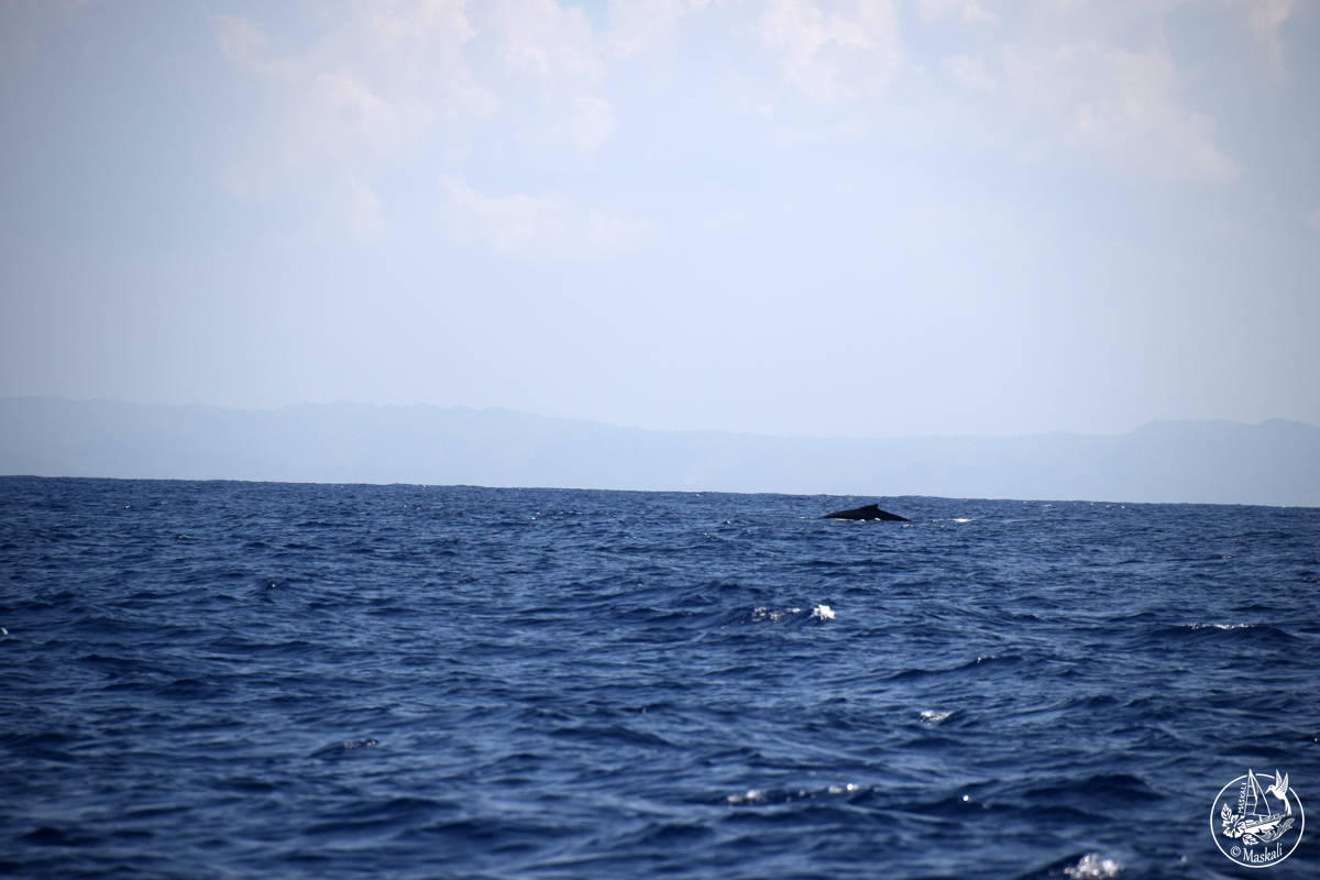 Notre première baleine !