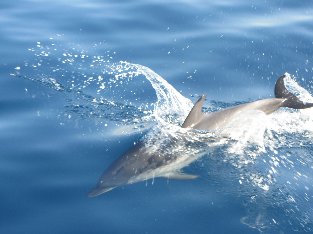 Tout le corps d'un dauphin en action !